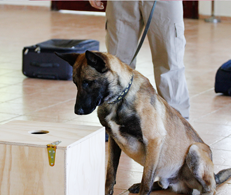 Special Trained Detection Dogs